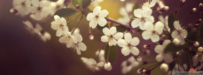 Nature flower fb timeline cover adorabletab leave a reply cancel reply thecheapjerseys Image collections