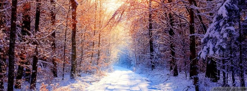 winter, ice, sunshine